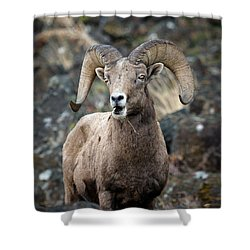 Shower Curtain featuring the photograph Startled Ram by Steve McKinzie