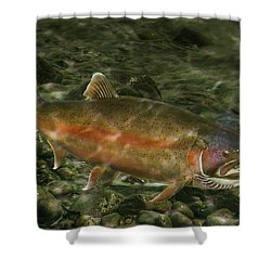 Steelhead Trout Spawning Shower Curtain by Randall Nyhof