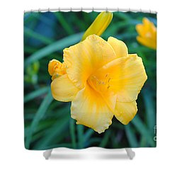 Stella De Oro Daylily Shower Curtain