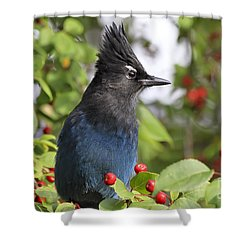Steller's Jay And Red Berries Shower Curtain by Teresa Zieba