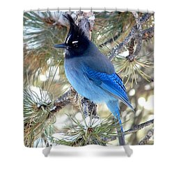 Steller's Jay Profile Shower Curtain
