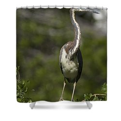 Stepping Carefully Shower Curtain by Phill Doherty