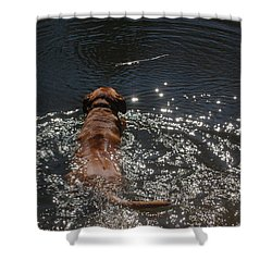 Shower Curtain featuring the photograph Stick by Mim White