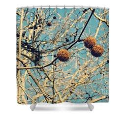 Sticks And Pods Shower Curtain by Meghan at FireBonnet Art