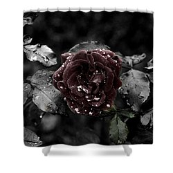 ...still A Rose Shower Curtain