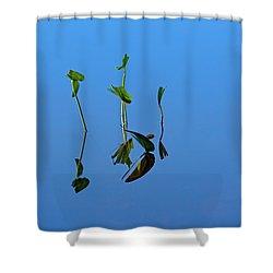 Still Shower Curtain by Karol Livote