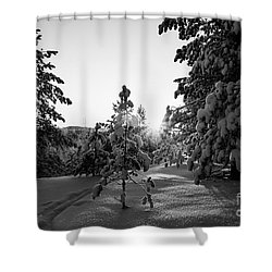 Still Standing In The Winter Sunset Bw Shower Curtain