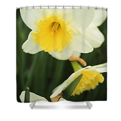 Stillness Shower Curtain by Julie Andel
