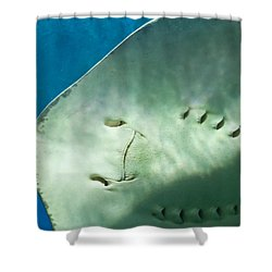 Shower Curtain featuring the photograph Stingray Face by Eti Reid
