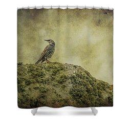Stonehenge Birds 3 Shower Curtain