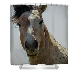 Shower Curtain featuring the photograph Stop Bothering Me by Rima Biswas