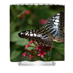 Shower Curtain featuring the photograph Stopping By by Denyse Duhaime