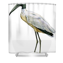 Stork Shower Curtain by Anonymous
