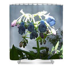 Stormy Bluebells Shower Curtain