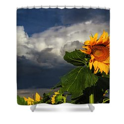 Stormy Sunflower Shower Curtain by Juli Ellen