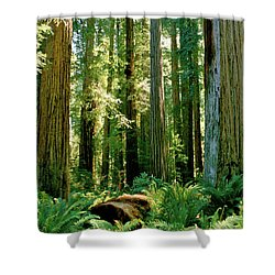 Stout Grove Coastal Redwoods Shower Curtain by Ed  Riche