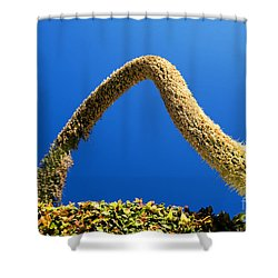 Strange Plant Under Blue Sky Shower Curtain by Yew Kwang