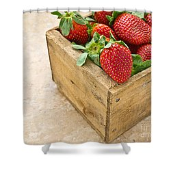 Strawberries Shower Curtain by Edward Fielding