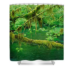 Stream Flowing Through A Rainforest Shower Curtain by Panoramic Images