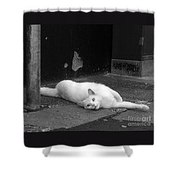 Shower Curtain featuring the photograph Street Cat by PJ Boylan