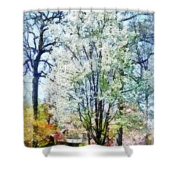 Street With White Flowering Trees Shower Curtain by Susan Savad