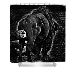 Strength Of One Shower Curtain