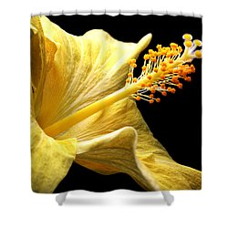 Stretcher Shower Curtain by Doug Norkum