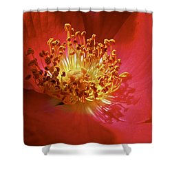 Striking It Rich Shower Curtain by Richard Cummings