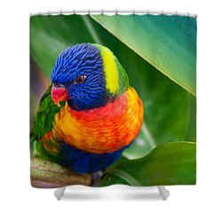 Striking Rainbow Lorakeet Shower Curtain