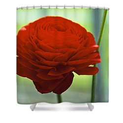 Striking Red Shower Curtain by Lana Enderle