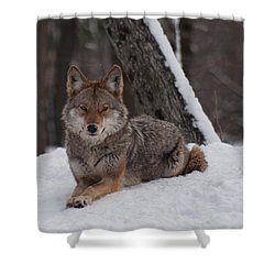 Shower Curtain featuring the photograph Striking The Pose by Bianca Nadeau