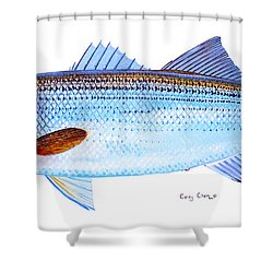 Striped Bass Shower Curtain by Carey Chen