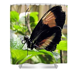 Striped Beauty Shower Curtain by Jennifer Wheatley Wolf
