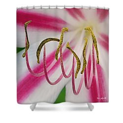 Shower Curtain featuring the photograph Striped Crinium Squared by TK Goforth