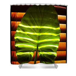 Shower Curtain featuring the photograph Stripes Of Light by Nina Ficur Feenan
