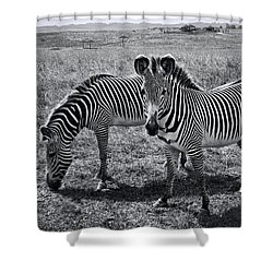 Stripes Duo Shower Curtain