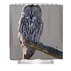Strix Nebulosa Shower Curtain by Mircea Costina Photography