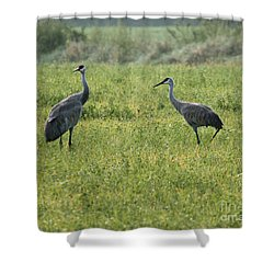 Shower Curtain featuring the photograph Strolling Cranes by Debbie Hart