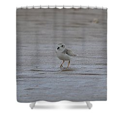 Shower Curtain featuring the photograph Strolling by James Petersen