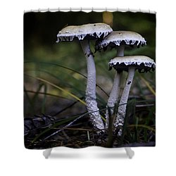 Shower Curtain featuring the photograph Stropharia Ambigua by Betty Depee