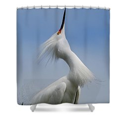 Strut Yer Stuff Shower Curtain by Skip Willits