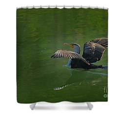 Strutting Cormorant Shower Curtain