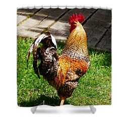 Strutting Rooster Shower Curtain by Susan Savad