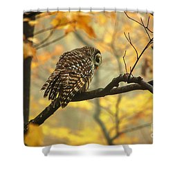 Stubborn Owl Shower Curtain by Debbie Green