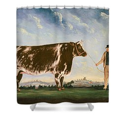 Study Of A Shorthorn Shower Curtain by William Joseph Shayer