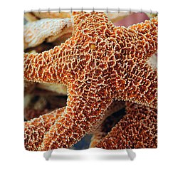 Study Of A Starfish Shower Curtain