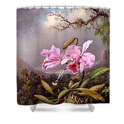 Study Of An Orchid Shower Curtain by Martin Johnson Heade