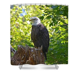 Shower Curtain featuring the photograph Stumped by David Porteus