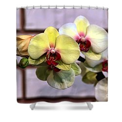 Stunner Shower Curtain by Teresa Zieba
