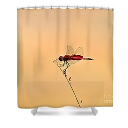 Stunning Saddlebags Shower Curtain by Al Powell Photography USA